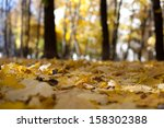 autumn leaves on the forest...