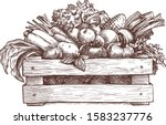 wooden box with vegetables... | Shutterstock .eps vector #1583237776