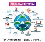 circadian rhythm vector... | Shutterstock .eps vector #1583344963