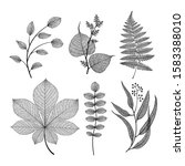 Leaf Vector Set. Botanical...