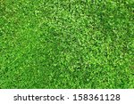 Grass Field With Clover