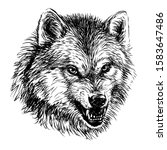 Angry Wolf. Sketchy  Graphical...