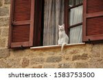 A White Cat Waiting For Its...