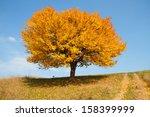 Autumn Lonely Tree
