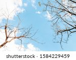 Branch Of Bodhi Tree Silhouette ...