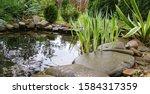 Beautiful Small Garden Pond...