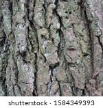 Background Of Bark Of An Old...