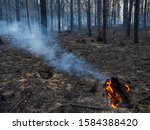 Burning Tree Stump After A...