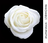 Stock photo bird eye view of white rose on black 158442446