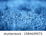 color of year  2020. blooming...   Shutterstock . vector #1584639073