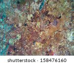 coral texture on ship wreck | Shutterstock . vector #158476160