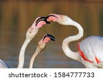 Love Skirmishes Between Pink...