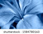 Classic Blue Background  Copy...