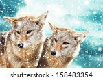 coyote pair against the blue... | Shutterstock . vector #158483354