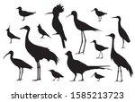 shorebirds and birds of fields. ... | Shutterstock .eps vector #1585213723
