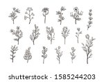 beautiful hand drawn floral...   Shutterstock .eps vector #1585244203