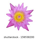 A  Lotus Flower On White...