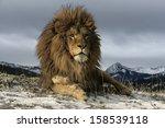 Barbary Lion  Panthera Leo Leo...