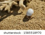 A little hermit crab in a white shell. Hermit crab on a sandy beach next to the coral. A hermit crab is bored on the shore.