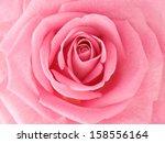 Stock photo pink rose macro 158556164