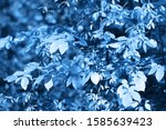 background with fresh leaves on ...   Shutterstock . vector #1585639423