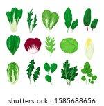 green salad vegetables leaves... | Shutterstock .eps vector #1585688656
