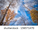 sky thought the autumnal trees | Shutterstock . vector #158571470