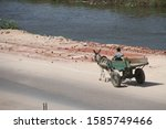 Egyptian Man Driving A Cart...