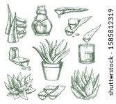 set of isolated aloe vera... | Shutterstock .eps vector #1585812319
