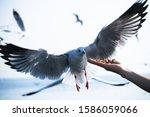 Seagull Bird Spreading Wings...