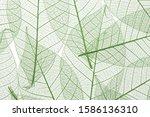 background from skeletonized... | Shutterstock . vector #1586136310