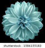 Watercolor Dahlia Flower...