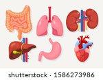 set of intestines  guts ... | Shutterstock .eps vector #1586273986