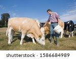 Livestock Farmer Feeding Cattl...