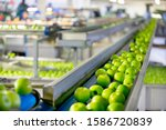 Small photo of Apples Being Graded In Fruit Processing And Packaging Plant