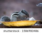 Squirrels Are Members Of The...