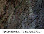 Dark Wood Texture. Abstract...
