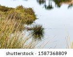 Wild Grasses And Shrubs...