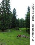 deer stag in autumn forest   Shutterstock . vector #1587621010