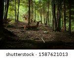 deer stag in autumn forest   Shutterstock . vector #1587621013