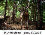 deer stag in autumn forest   Shutterstock . vector #1587621016