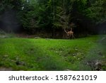 deer stag in autumn forest   Shutterstock . vector #1587621019