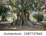 Wonderful Giant Trees In...