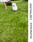 Small photo of Woman walking dog on leash in grass