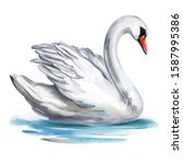 White Swan Bird On The Pond ...