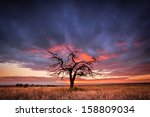 Silhouette Of A Tree In The...