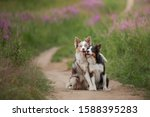 Two Dogs Hugging Together For A ...
