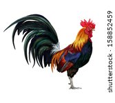 Rooster Digital Painting  ...