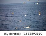 Flock Of Seagulls Flying In The ...