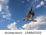 Stock photo young kitten jumps and glide through the air 158865203